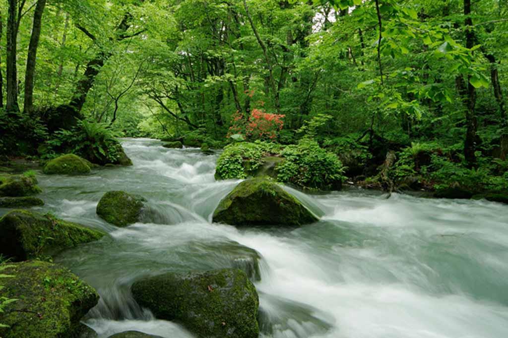 阿修羅の流れが見所の大自然の散歩道【奥入瀬渓流】