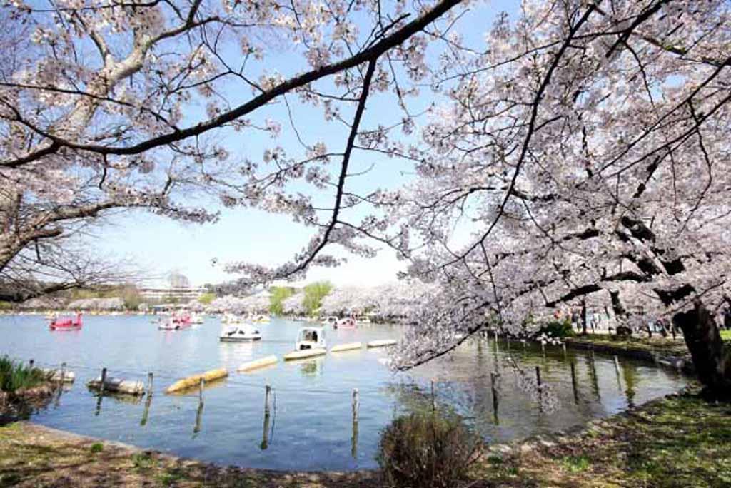 東京を代表する「桜」と「ソメイヨシノ」の名所【上野恩賜公園】