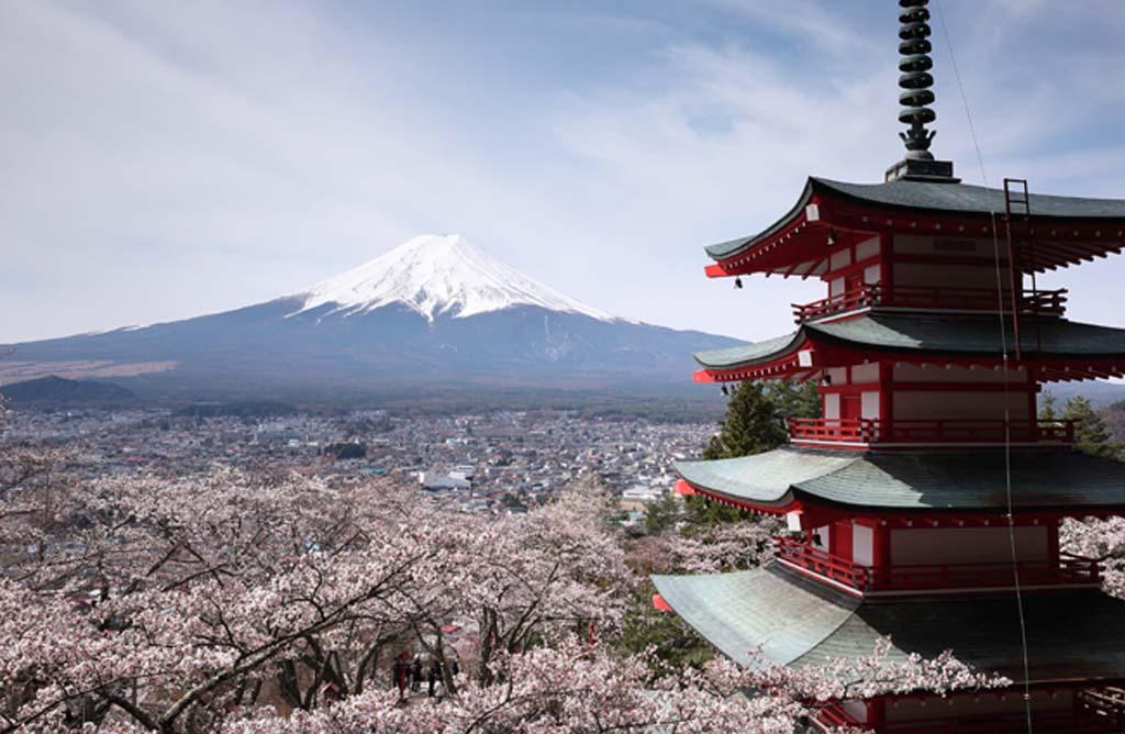 日本を代表する富士山と桜の絶景スポット【新倉山浅間公園】